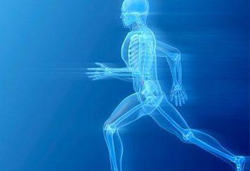 Come rompere il metabolismo (Attiva). caratteristiche metaboliche