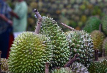 Durian – owoce królewskie