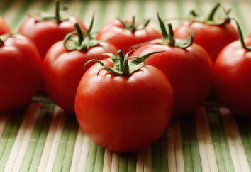 Pomodori crescenti con il metodo di I. M. Maslov: passo per passo le istruzioni