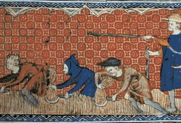 Estructura feudal: ocurrencia y características