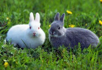 Les lapins mangent? lapin décoratifs: les soins et l'entretien. La nourriture pour les lapins