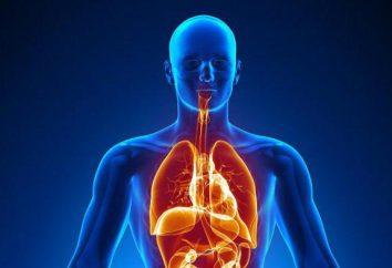 Cuerpos – ¿qué es esto? ¿Cuáles son los órganos y en qué se diferencian?