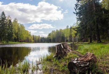"""""""Cool place"""" (Elk Island, Moskau): Fotos und Bewertungen"""