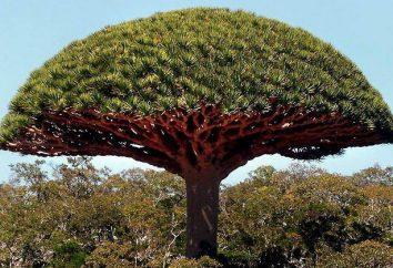 Les plantes les plus extraordinaires du monde. propriétés étonnantes des plantes