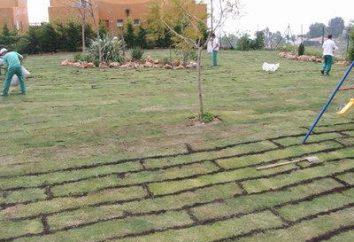 Cómo sembrar césped de hierba: la preparación, la selección de la cultura y la creación de céspedes