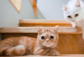 Las razones por las que usted debe comprar un segundo gato