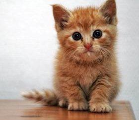 Dlaczego ślinienie kot, i co zrobić, jeśli właściciel zauważył