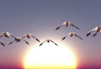 Las aves migratorias: el nombre del niño, una descripción, una lista. Fotos de aves con los nombres de los niños
