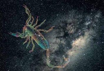 Który wpisuje znak zodiaku Skorpion?
