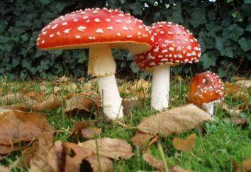 Traumdeutung: Traum Pilze – warum?