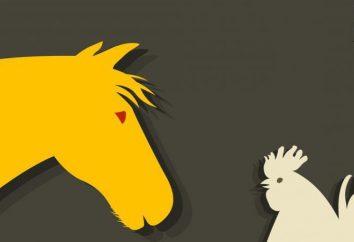 Koń i Rooster: zgodność w miłości, przyjaźni i pracy