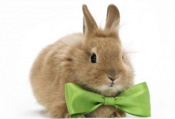 En el ojo del conejo encona: qué hacer y cómo tratar?