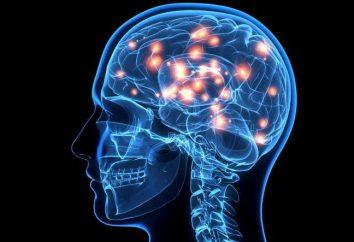 Fizjologiczne podstawy psychologii percepcji