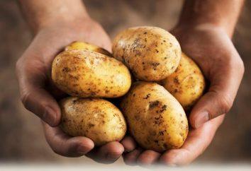 patate cuocere con la carne in forno. ricette di cucina