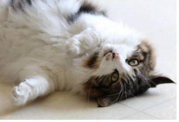 Envenenando el gato: ahorro de mascota