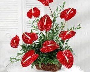 arranjo de flores, com suas próprias mãos criou as regras básicas de preparação e dicas