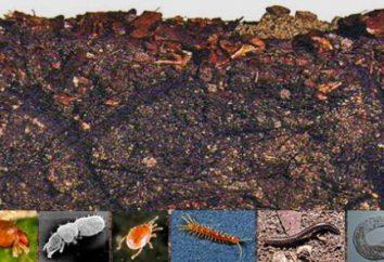 Les animaux dans le sol. habitants du sol et leur adaptation à l'environnement
