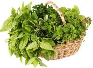 Quelles sont les herbes sont recueillies de mai: une liste des plantes et en particulier leur récolte