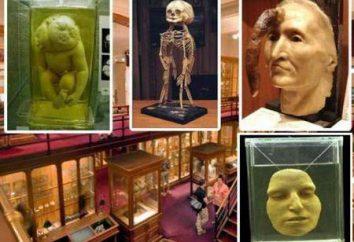 Mütter Museum, historia Pennsylvania, artefakty, fotografie