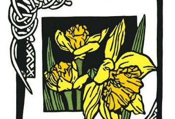 Narciso é o símbolo nacional do País de Gales