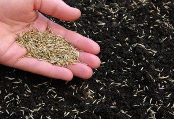 Cómo plantar césped de hierba? recomendaciones