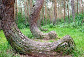 Enigmi della natura e inesplorato mondo incredibile che ci circonda