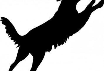 Jak odzwyczaić psa skakać na właściciela: wskazówki