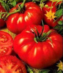Tomato King of Kings: Bewertungen Lkw-Fahrer
