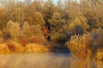 Lugares naturais de interesse na região de Bryansk
