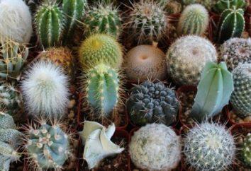varietà cactus, la foto e la descrizione. I principali tipi di cactus