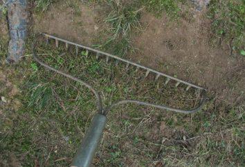 Come sbarazzarsi di muschio nel giardino di un giardiniere professionista?