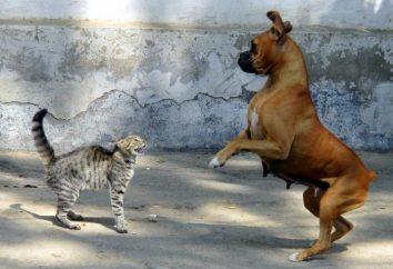Zwyczaje zwierząt: dlaczego kot syczy