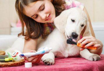 Kamień nazębny u psów: zapobieganie i leczenie