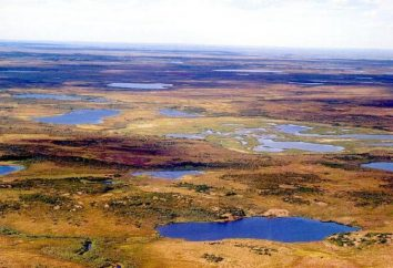 Bolshezemelskaya Tundra: características naturais