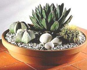 Abitare in un deserto – cactus termofile. Assistenza a domicilio