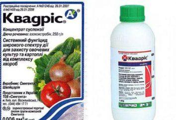 """Fungicyd """"QuadrisTM"""": instrukcja obsługi, opis i opinie"""