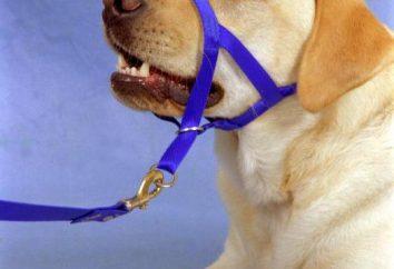 Jak zrobić Halti psa własnymi rękami