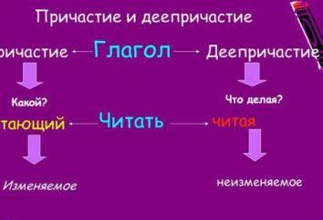 ¿Cómo distinguir participio del participio verbal: las principales características morfológicas