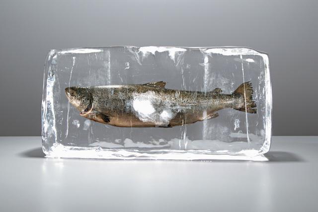 gefrosteten fisch braten