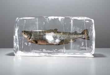 Flipping libro dei sogni: pesce surgelato che cosa sogno?