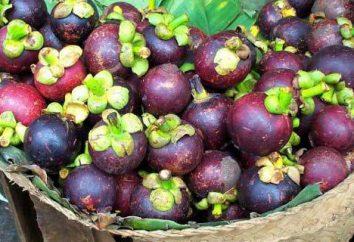 Mangostán dieta de jarabe: instrucciones de uso, la composición, las opiniones