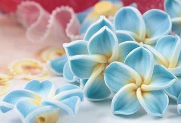 Jak zrobić kwiaty z polimeru gliny? Master-class na uczynienie kwiat wisiorek.