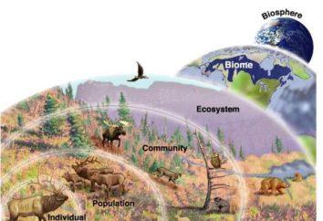 nivel de la población de la misma especie de organización de la vida. Descripción y ejemplos