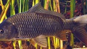 Attraper la carpe en Octobre: les secrets de la pêche réussie