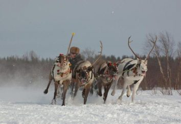 Sami wieś w rejonie Murmańska: fotografie, opinie, wycieczka