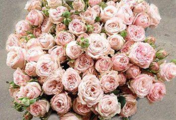 "Rose ""bombastique"": rosas holandesas"