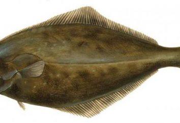 Halibut: jak gotować ryby prawidłowo