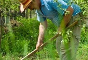 "Tiller ""Tarpan"" – uma ferramenta indispensável no jardim"