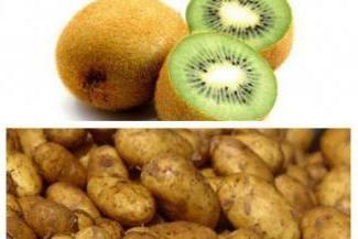 """Uprawiamy ziemniaki. Grade """"Kiwi"""": opis odmiany, zwłaszcza uprawa i pielęgnacja"""