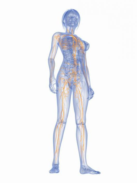 ganglio linfático en la pierna: la ubicación, las razones para el ...